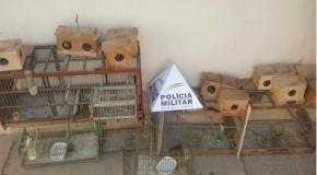 Presos homens acusados de tráfico de drogas e de aves da fauna silvestre, em Araxá